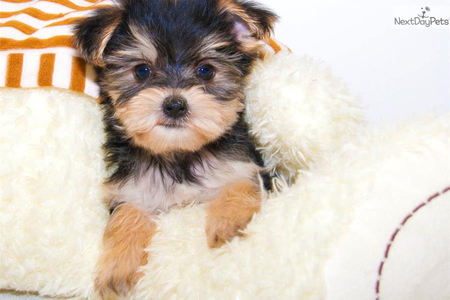 Free Dog Vaccinations Columbus Ohio