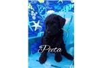 Picture of Peeta