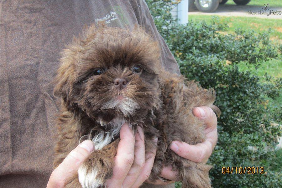 Franco S Dog Grooming