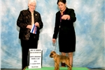 Picture of AKC CHAMPION