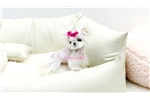 Picture of Smallest micro maltese girl Teeny Thumbelina