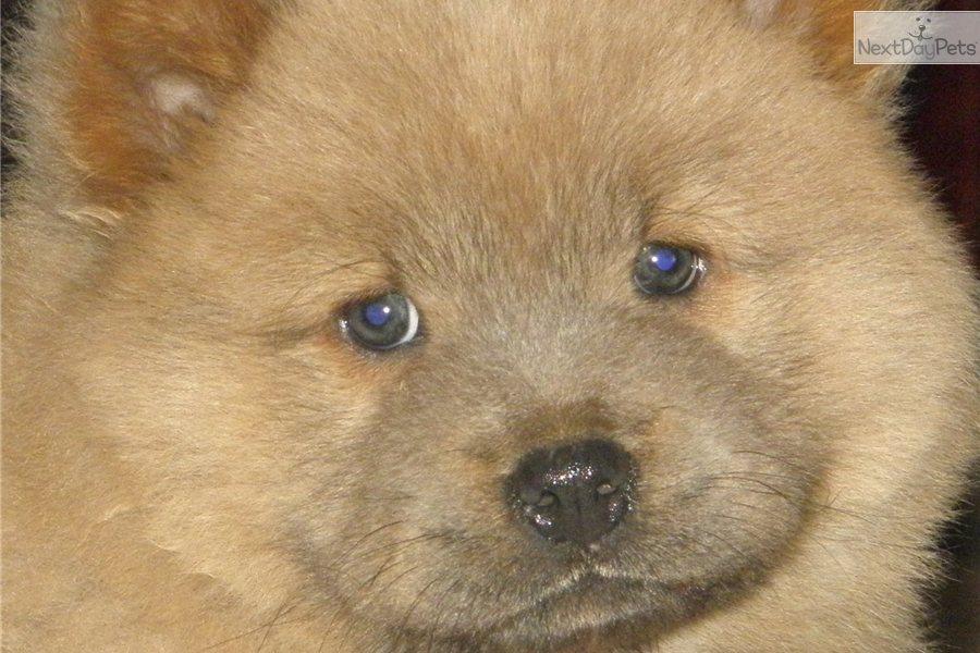 pedigree dog breeds just dog breeds spaniel dog breeds small dog ...