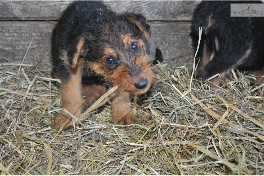 Dogs and Puppies for Sale and Adoption | Oodle Marketplace