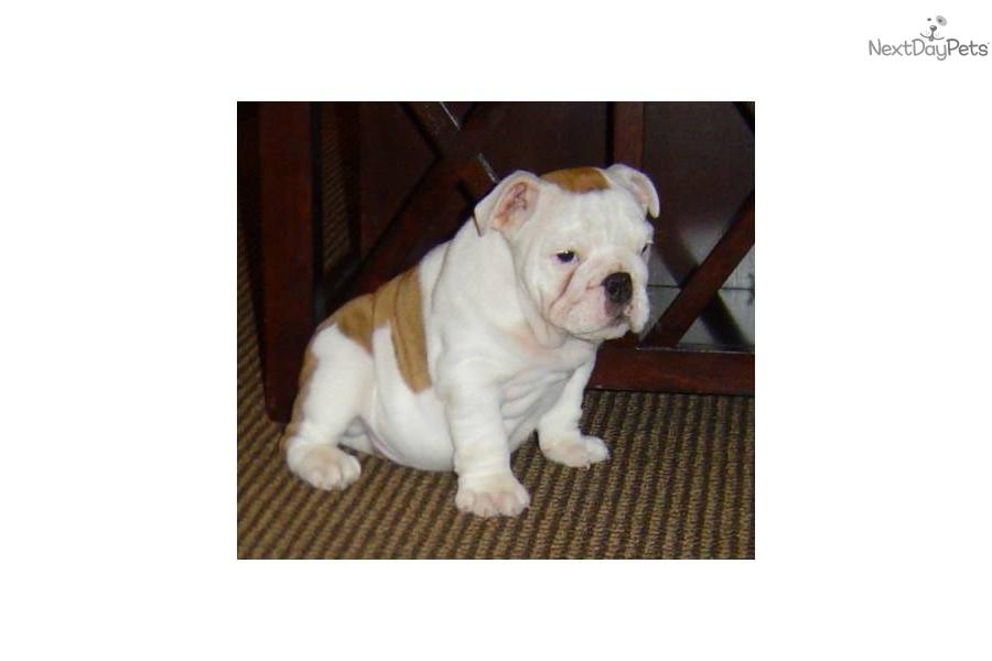 Champ Dogs Pet Insurance