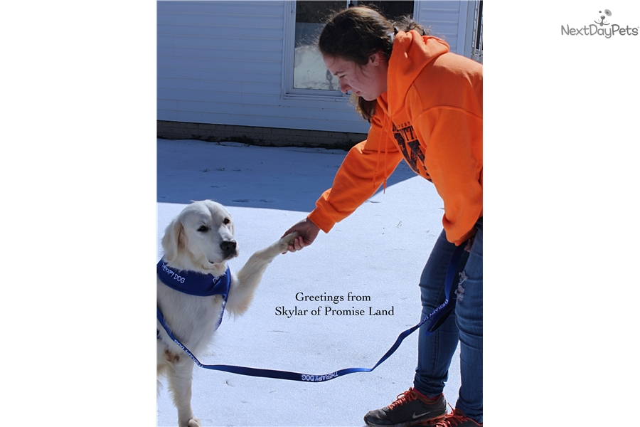 Therapy Dogs For Sale Maryland