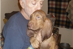 Picture of SIr Percival - A Litter from Camelot
