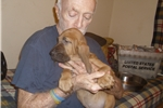 Picture of Lady Lynette - A litter from Camelot