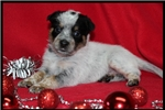 Picture of Sadie~Precious Christmas Baby~