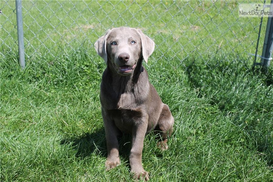 Dog Training Omaha
