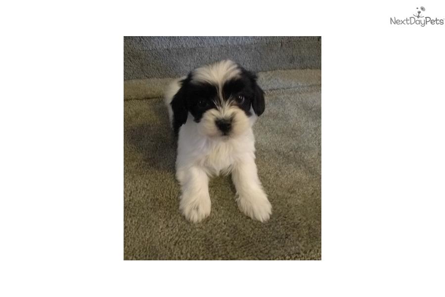 Dogs For Sale In Winston Salem
