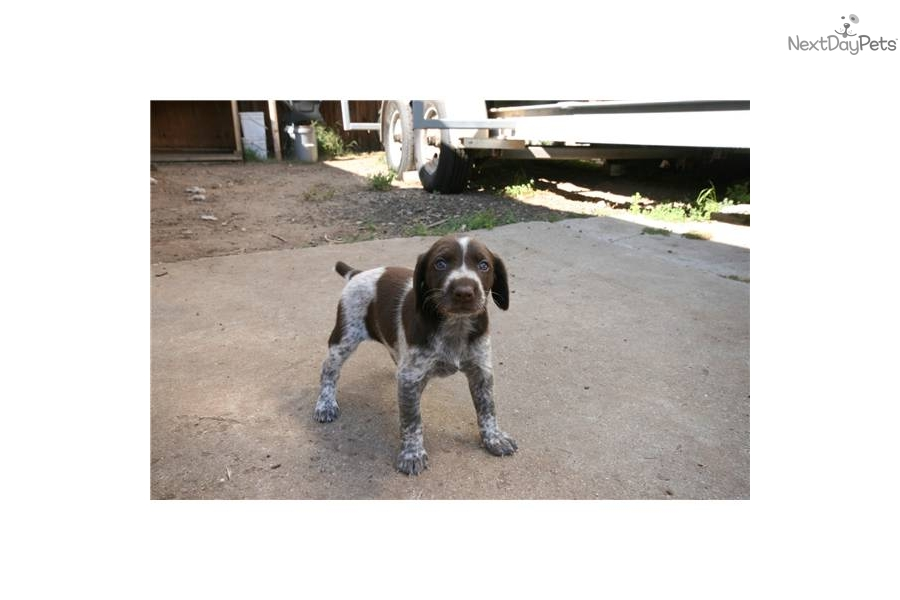 Dog Training Ventura County
