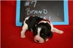 Picture of Brand - Black / white / tan