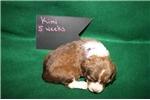 Picture of Kimi- Liver / white / tan