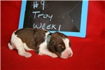 Picture of Troy- Liver Tri