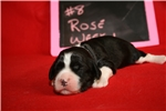 Picture of Rose - Black/White