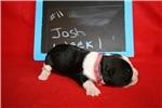 Picture of Josh - Black/White