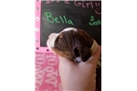 Picture of Bella Liver/white girl