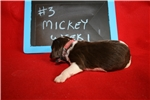 Picture of MIkey- Liver Tri