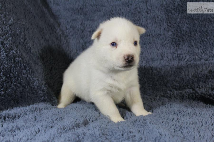 Dogs For Sale In Memphis Tn Area