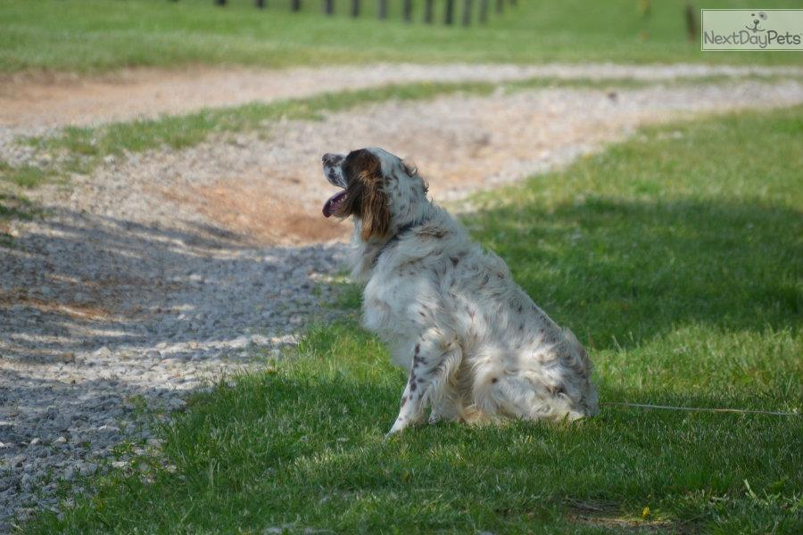 Service Dogs For Sale In Kentucky
