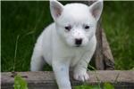 Picture of Rare White