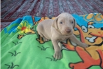 Picture of Puppy #CYE5