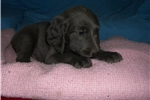 Picture of Puppy #WY4