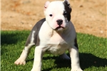 Picture of SUPER FLASHY MALE.. AVAILABLE!!