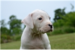 Picture of Stryker! Just in time for some summer fun!