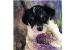 Picture of Emma, Tiny Fullgrown!