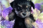 Picture of Alice, Tiny!