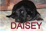 Picture of Daisey