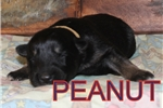 Picture of Peanut