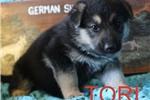 Picture of Tori
