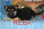Picture of Reba