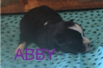 Picture of Abby