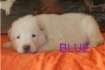 Picture of Blue