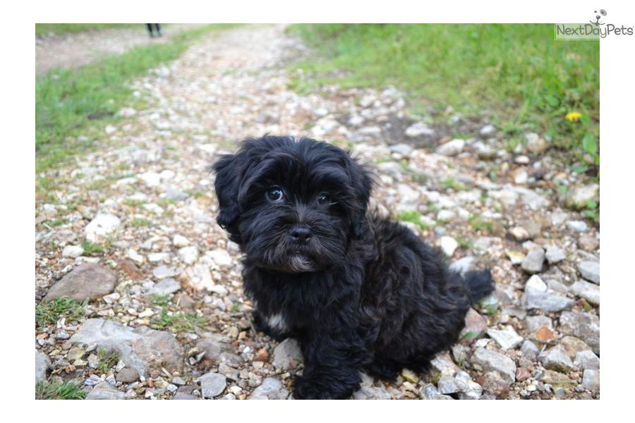 Cuddler Dog Breeds