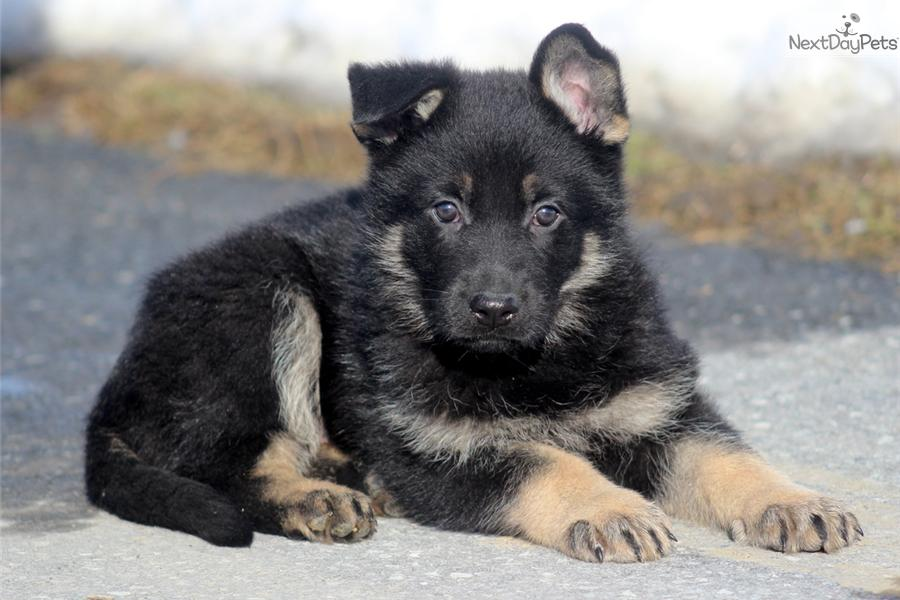 how to get your dog akc registered without papers