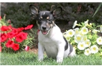 Picture of Warren - Fox Terrier Mix Male