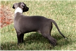 Picture of POTEAU-SWEET COMPANION FOR YOU