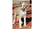 Picture of ZION-AKC REGISTERED-HANDSOME GUY