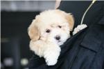 Picture of Juniper Love My Puppy
