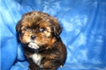 Picture of Newton Love My Puppy