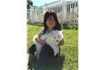 Picture of AKC Female Samoyed puppy!! Champion Sire! OFA/CERF