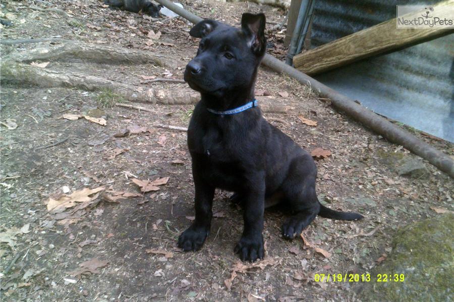 Top Dog Kennels Greenville Sc