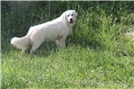 Picture of ICT clear yellow collar male