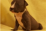Picture of Female pup B