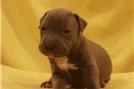 Picture of Female pup E
