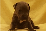 Picture of Female pup F